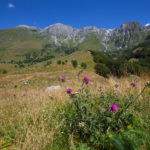 Triglav national park, mountain pasture Kuhinja (FPM)